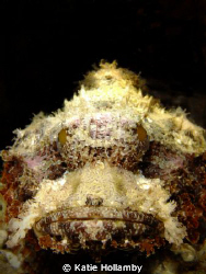 Scorpian Fish, point and shoot Fuji by Katie Hollamby