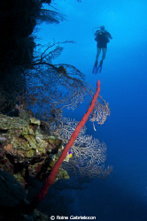 Wall diving at Cayman Islands by Roine Gabrielsson