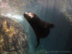 Los Islotes Baja California by Ronaldo Cavichiolli