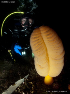 My wife Bea with an Orange Sea Pen. by Bea & Stef Primatesta