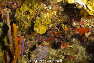 In the British Virgin Islands the Indians dive site is so... by Bruce Campbell