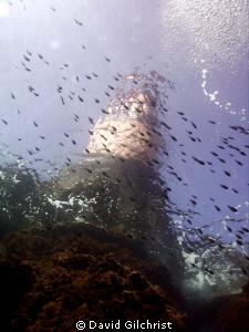 Schooling fish swim below lighthouse, La Fourmigue, off P... by David Gilchrist