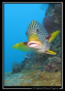 Picture taken on the U.S.S Liberty wreck (Bali) by Raoul Caprez