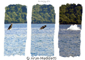 BREACH!!! Bull sperm whale advertising his presence to t... by Arun Madisetti