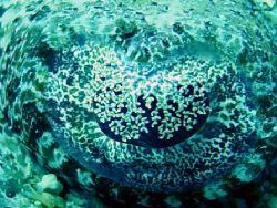 Krokosile fish eye. red sea on Thistlegorm by Jj Waanders
