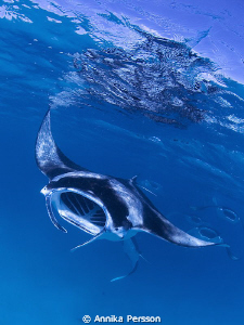 Manta magic in the Maldives by Annika Persson