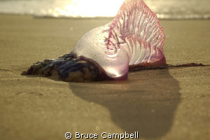 I was just glad to avoid stepping on this fellow as I wal... by Bruce Campbell