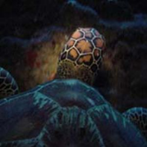 Turtle at night over and abovew/ digital  by Martin Dalsaso