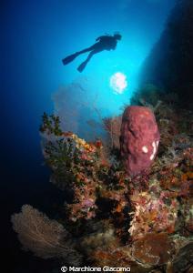 Wakatobi reef 2010 Nikon D200, 10,5 mm, twin strobo by Marchione Giacomo