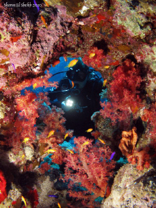 Beautiful colors of the Red Sea. by Bea & Stef Primatesta