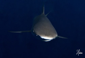 As dusk took over during my safety stop sharks swim in  a... by Steven Anderson