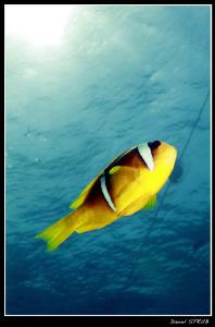 Subex House Reef :-D by Daniel Strub