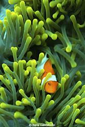 Nemo! by Roine Gabrielsson
