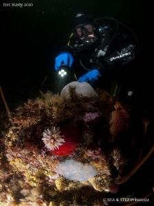 Underwater northwest pacific life. by Bea & Stef Primatesta