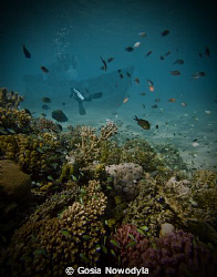 Scuba diving - not only an exciting adventure but great e... by Gosia Nowodyla