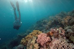 The reef , siladen island Manado Inadonesia by Giulio Arrigucci
