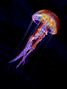 """""""Jellyen""""  Jelly-Ufo-Alien this triad composes the """"Jel... by Henry Jager"""