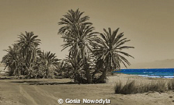 Goodbye Red Sea.  I will remember you ... by Gosia Nowodyla