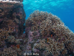 Coral Sea.  Canon G-10. by Bill Arle