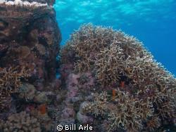 Coral Sea.  Canon G-10. by Bill Arle