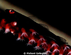 Goby silhouette, with some experimental lighting... by Michael Gallagher