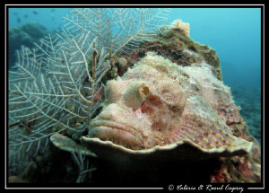 Custom-made coral for this scorpion fish by Raoul Caprez