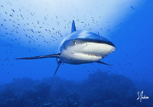This image was taken while diving at Hammertime Reef -Bah... by Steven Anderson