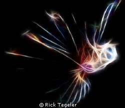 Lion fish.... Kulau, East New Britain, PNG by Rick Tegeler