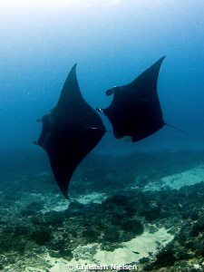 2 manta rays passed us on the way to our safety stop and ... by Christian Nielsen