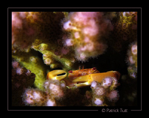 Encounter during a night dive  - Saudi Arabia - Canon S90... by Patrick Tutt
