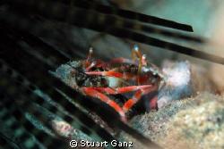Hermit Crab Party by Stuart Ganz