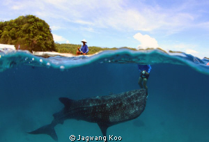Whale Shark by Jagwang Koo