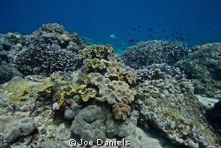 Seychelles Reefscape by Joe Daniels