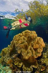 Snorkeling at the Mangroves.. by Tunc Yavuzdogan