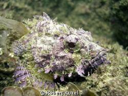 Rock fish, no flash by Robert Kuzel