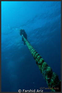 diver on the rope. by Farshid Ariz