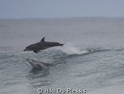 Dolphins visiting us during a surfing competition; they r... by Hiki Du Plessis