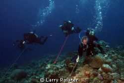 Hooked in Blue Corner, flying high, watching the shark ac... by Larry Polster