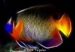 Blue mask angelfish by Rick Tegeler