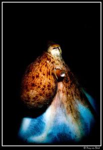 Octopus. by Dray Van Beeck