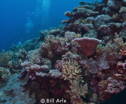 Amazing corals in Coral Sea.  Canon G-10. Ikelite housing... by Bill Arle