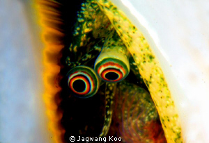 Shell eyes by Jagwang Koo