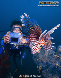 Bob reviews his shot of the Lionfish, TAR Park Sabah Mala... by Richard Swann