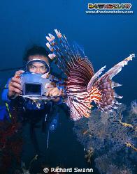 Bob reviews his shot of the Lionfish, TAR Park Sabah Mala... by Richard Swann