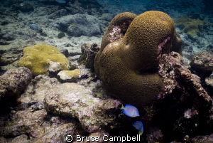 Odd shaped brain coral by Bruce Campbell