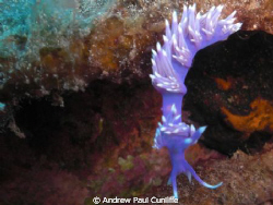 I personally think the Nudibranch is Ideal to practice on... by Andrew Paul Cunliffe