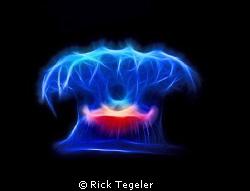 Close encounters.......  Jellyfish. by Rick Tegeler