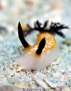 Nudibranch by Jagwang Koo