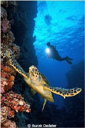I had positioned my model already when this turtle stoppe... by Burak Dedeler