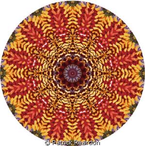 Kaleidoscopic image from a macro shot of a box star. by Patrick Reardon